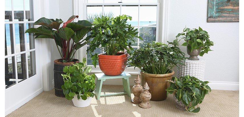 Zz Plant Leaf Propagation