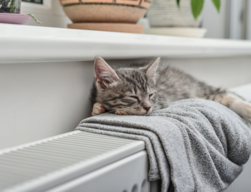 Pet Owners: Tips for Heating Your Home to Keep You and Your Pet Comfortable